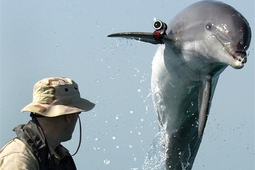 Gaza Strip: Hamas capture Mossad spy dolphin says Israeli Army radio