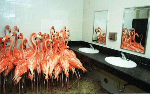 How Zoos are Preparing for Hurricane Irma