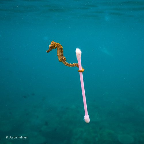 Finalist Shots of Wildlife Photographer of the Year 2017