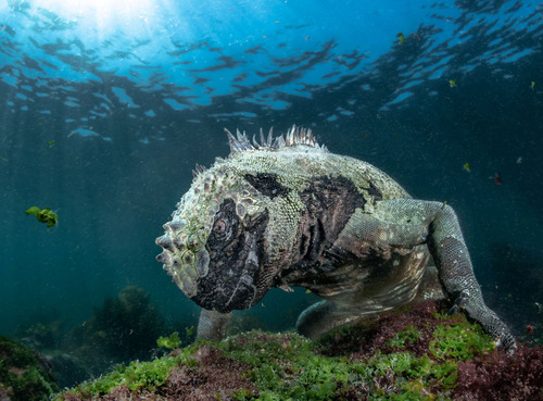Winners of the 2019 BigPicture Natural World Photography Competition