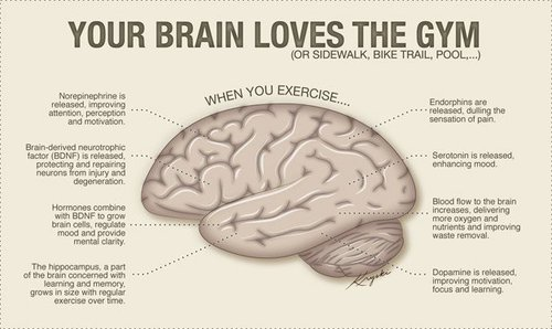 Exercise Can Help Increase Size Of The Brain's Hippocampus